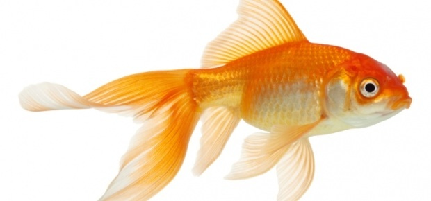Cool facts about fish ponder monster for What fish has eyelids